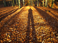 My Shadow in Forest (Habub3) Tags: travel autumn shadow holiday forest canon germany deutschland reisen europa europe urlaub herbst powershot wald schatten vacanze g12 2013 habub3