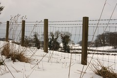 Through the fence (rosejones1uk) Tags: trees snow fence fencedfriday