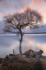 The Wee Bare Tree. (Gordie Broon.) Tags: longexposure nature water clouds fence reflections landscape geotagged photography scotland spring scenery rocks alba scenic escocia inverness lonetree schottland ecosse invernessshire scozia scottishhighlands dunlichity lochduntelchaig canoneos7d canon1755mmlens gordiebroon haidafilter