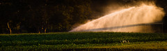 Eric Hirota - WDI Photo Club (flowerstreetphotogroup) Tags: disney disneyranch goldenoakranch sprinkler wdiphotoclub