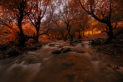 Autumn Colours Palette 3 (Kamel Hamdi) Tags: autumn trees plant fall water forest river long exposure colours outdoor foliage serene