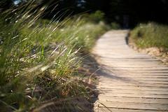 Boardwalk (Sean Anderson Media) Tags: doorcounty nikon50mmf14 f14 50mm fotodiox nikontosonyemount lensadapter sonya7rii sand wood boardwalk beach lakemichigan primelens grass nature