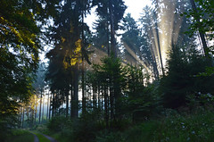 DSC_3316 Ein traumhafter Sonnenaufgang im Wald - A dreamlike sunrise in forest (baerli08ww) Tags: deutschland germany rheinlandpfalz rhinelandpalatinate westerwald westerforest wald forest licht light sonne sun sonnenaufgang sunrise nebel mist morgensonne morningsun natur nikon