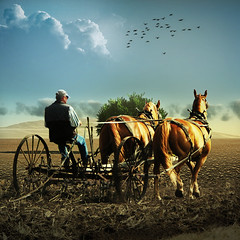 The old plow (jaci XIII) Tags: arado lavoura fazenda agricultor cavalos agricultura animal pessoa homem plow tillage farm farmer horse person man