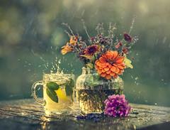 Splash of Sparkles... (liliaalvarado) Tags: stilllife rain splash water tea drops color flowers