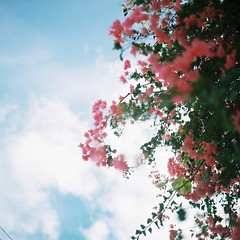 (**mog**) Tags: rolleiflex portra400 flowers