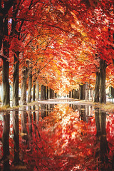 Autumn paints in colors that summer has never seen. (www.juliadavilalampe.com) Tags: autumn otoo prater vienna austria trees outdoors europe herbst red yellow puddle reflejo agua lluvia light