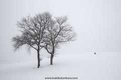 AGAZAPADO (Obikani) Tags: winter snow white cold tree trees photographer landscape frozen minimal minimalism beluntza euskadi euskalherria lava araba canonikos