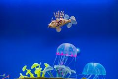 World in aquarium (Valery Parkhomenko) Tags: nikon d610 1855mm water ocean fish blue jellyfish oceanarium kyiv ukraine nikkor minimalism animalplanet