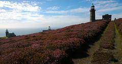 Calf of Man lighthouses. (Chris Kilpatrick) Tags: chris outdoor nature heather purple calfofman isleofman irishsea water lighthouse august