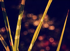 Abstract nature (heinrich_511) Tags: abstract color sun light grass bambus bokeh