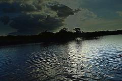 a4 (reginatnia) Tags: natureza photography manaus hoteltropical ribeirinhos rionegro riosolimoes portos pordosol aventura amazonas paisagens teatros