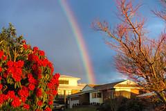 Sunset Rainbow (XPinger (Chris Sutton)) Tags: rainbows sunset bushes tree