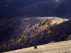 Radiša Živković - So many roads III (Radisa Zivkovic) Tags: autumn light mountain yellow landscape nikon scenery europe shadows hill serbia srbija golija planina