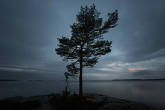 Tree (- David Olsson -) Tags: longexposure november sunset lake tree nature water clouds landscape nikon sundown cloudy sweden karlstad le fx vnern lonelytree 2012 vrmland 1635 ndfilter d600 1635mm lakescape bergvik smoothwater smoothsky lonesometree davidolsson nd500 lightcraftworkshop 1635vr bergviksudde