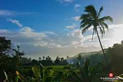 Dawn's Early Light (Thncher Photography (1.5 ML Views - Thank You!)) Tags: leica sunrise palms hawaii waves rangefinder maui pacificocean hana fullframe fx m9 keanaepeninsula oceanmist summicron35mmf2asph leicam9 agm9