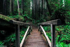 Walkway to Heaven! (VijayramM) Tags: california trees green nature rain forest canon nationalpark woods rainforest calm hike trail tropic serene redwoods crescentcity redwoodnationalpark boyscouttrail gaints canon1755mm canon60d