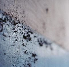 (greenxrage) Tags: abandoned 120 wall mediumformat kodak nail plaster crop flaking portra 800 decayed urbex mamiyam645 80mmf19