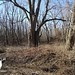 "Illinois Land for Sale - 246 Acres Alexander County • <a style=""font-size:0.8em;"" href=""http://www.flickr.com/photos/66358149@N06/8428504472/"" target=""_blank"">View on Flickr</a>"
