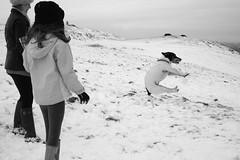 snowdog (martin.mutch) Tags: