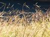 Hallelujah... P1190873 ( RêveOcéanOceanDream) Tags: light sun art nature grass soleil lumière herbe jeffbuckley hallelujah impressedbeauty flickrdiamond