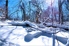 Snow Blanket (Mambo'Dan) Tags: park winter snow nature brooklyn snowstorm prospectpark parkslope blizzard prospect snow2013