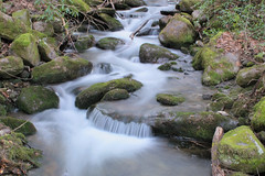 stream feeding Big Creek