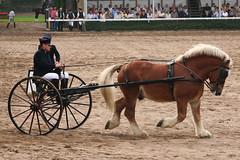17.09.2006-16.44.11.jpg (Heizfeiz) Tags: tiere pferde warendorf hengstparade