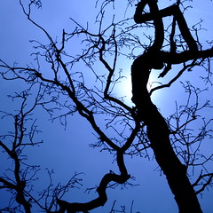 silhouette limbs (jaypchances) Tags: winter sun tree silhouette branch boom backlit limb zon takken tegenlicht