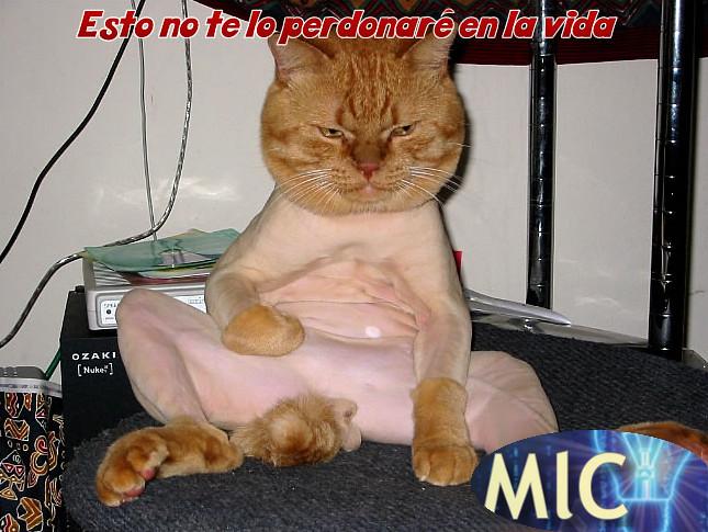 gato_afeitado