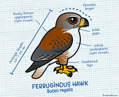 Ferruginous Hawk Statistics (birdorable) Tags: