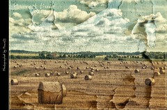 Zingst - Harvest time - Field (pana53) Tags: sky field clouds day himmel wolken textured zingst mecklenburgvorpommern harvesttime feldarbeit textur mcpomm erntezeit pana53 photographedbypana53 texturedbypana53