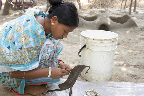 A Bangladeshi woman slicing fish, Dinajpur, Bangladesh. Photo by Finn Thilsted, 2012.