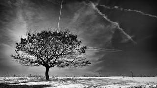 Winter Oak | 066/365 2013
