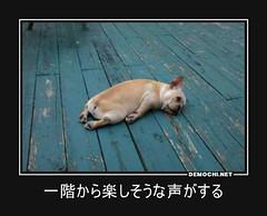 一階から楽しそうな声がする #犬 #ペット #動物 (Demochi.Net) Tags: life cute sexy japan fun japanese motivator culture 日本 ペット 猫 demotivator 金 家族 結婚 ゲイ 女 子供 おっぱい 愛犬 政治 社会 巨乳 文化 眼鏡 教育 demotivators 経済 女性 初恋 r18 女子 カップル 子猫 女装 お笑い motivators 会社 少子化 企業 ユーモア 恋 悪い 格差 風刺 一言 デモチ 大喜利