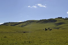 Outdoor living (RadamesM) Tags: field countryside cattle interior campo riograndedosul pampa pecuria gado cambardosul