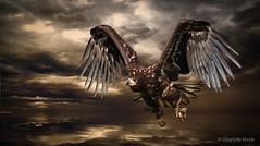 White tailed Sea Eagle (CharlotteBoyleMedia) Tags: wings flight beak feather dramatic canon350d predator wingspan soar birdofprey talons whitetailedseaeagle wingbeat