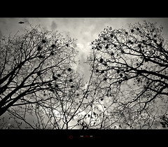 ... (_MaK_) Tags: sky bw cloud abstract tree bird silhouette fly blackwhite nikon conceptual