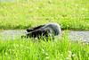Cat (EllaRot) Tags: gattonero gatto meow occhiverdi prato natura animali fiori black blackcat colors allaperto piccola cute