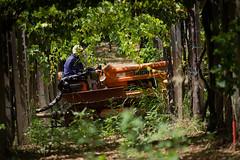 110816Morro d' Oro20 (emanueleronchi) Tags: abruzzo morrodoro esterni trattore vacanze viti