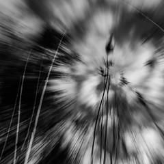 IMPLOSION SUR LA RIVE (zventure,) Tags: bordsduvar buissons blackandwhite bois bw nb noiretblanc nature alpesmaritimes abstrait aube arbre carr cach roseaux ciel contreplonge monochrome