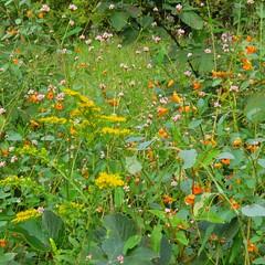 Trail flora (fishhawk) Tags: flora mixture birdingtrail trailflora