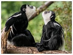 P2670912 (bh-fotografie) Tags: allwetterzoo zoo münster tiere gx80 lumix panasonic