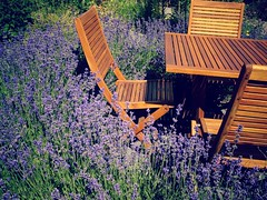 Lavender in a garden. (France-) Tags: 45 lavande lavender chaise chair table garden jardin bc canada bois wood summer t