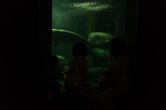 Acuario Agosto 2016 (62) (Fernando Soguero) Tags: acuario zaragoza acuariodezaragoza aragn turismo aquarium nikon d5000 fsoguero fernandosoguero
