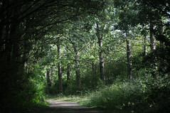 Sunday afternoon stroll (jeangrgoire_marin) Tags: stroll nature trees afternoon summer path green palaiseau essonne