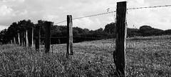 (Tino Ellermann) Tags: alpha6000 a6000 alpha zaun fence black
