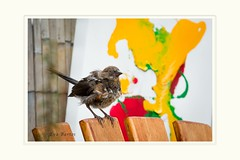 Listen, I'm going crazy, there's graffiti all-over this garden now (Krasne oci) Tags: spottedtowhee bird artphotography art abstract painting garden nature young evabartos gardenart original photographicart flickr funnyart