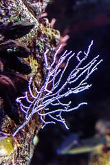Corallo Bianco - Oceanario Lisbona (antoniosimula) Tags: oceanario lisbon lisbona lisboa portogallo portugal area expo fish flora fauna nikon d3200 35mm 70300 tamaron ocean species pacific atlantic indian