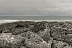 Watching the waves (Mario Donati) Tags: 7dwf nikon d3100 nikkor35mm18 tortugabay galpagos ecuador